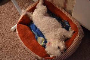 Angel Being Lazy In Her Bed by Jaws1996