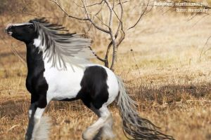 Horse Picture 6 by CocoQueenofCards