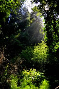 Muir Woods by xdgrace