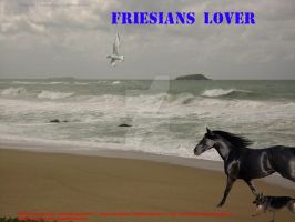 For Friesians Lover of PB3 by XtremeMystery