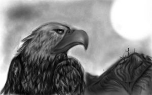 eagle by lilwizard38