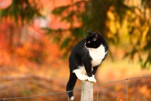 Autumn Cat by janernn