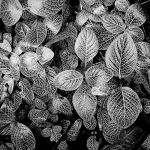 Eden leaves by Coigach