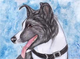 Pet Portrait: Jack by neon-possum