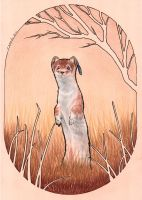 Autumn Stoat by Nivailis