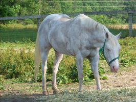 Its a white horsey 2 by blondy0262
