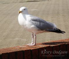 Scary seagull by Kirsty2010dodgs