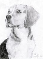 Beagle by Ingridda