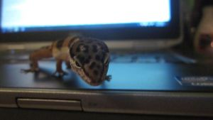 Computer Gecko!!! by ANG3Lloveforsin