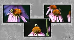 Buzzy Bee Collage by Silver-Dew-Drop