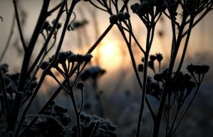 Dried weeds and sunrise by April-Mo