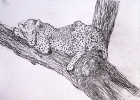 Daily Sketch: Reclining Leopard by misshappycreature