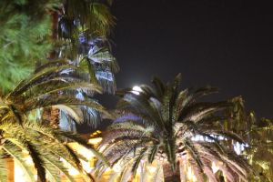 French Riviera by Moonlight : Behind Palms by Danelp