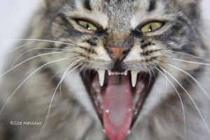 wild cat by elize-n