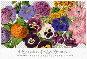 7 Botanical PNGs By heykid by heeykiid
