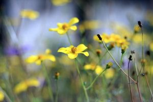 little yellow flowers by 1Honey1