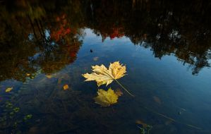 Autumn and Sigma Dp0 Quattro  _9_ by my-shots