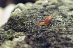 Snail by poshbeck