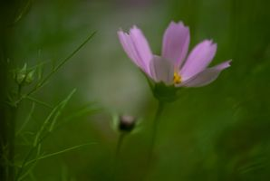 Pink flower by Theressa