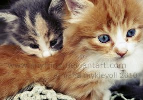 .kittens. by snyfrinx