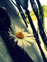 I go crazy for daisies by HopeAnDeloI