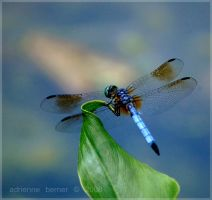 Dragon Fly II by adeb1113