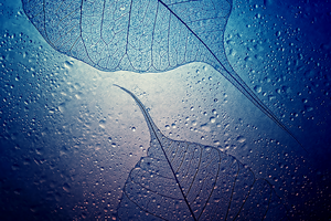 Water Drops Wallpaper for S4 and Note3 by kingwicked