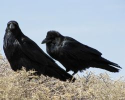 Painted Desert Pair by Canislupuscorax