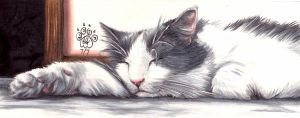 Let Sleeping Cats Lie by FelesTacita