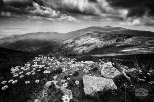 The valley of shadows BW by Bojkovski