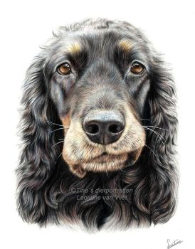 Dana the cocker spaniel, commissioned portrait by Tinesdierportretten