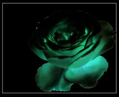 Lighted Rose by ARainbowPrincess
