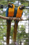 Parrot Stock 07 by Malleni-Stock