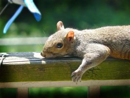 Relaxing squirrel by raverqueenage