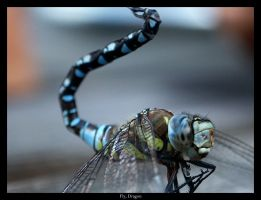 photo Fly Dragon by syrus