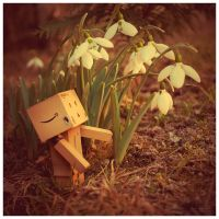 Danbo and the snowdrop by Hemaka86