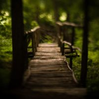 A Bridge In Woods by DominikKucera