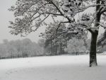 Place 272 - tree under snow by Momotte2stocks