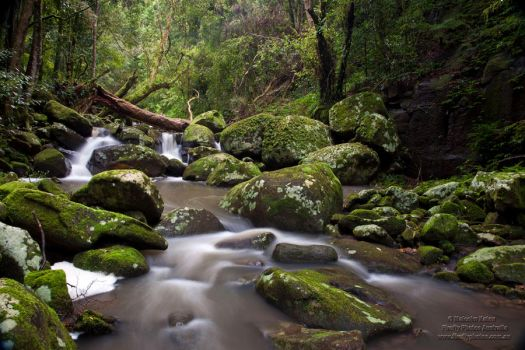 Valley Paradise by FireflyPhotosAust