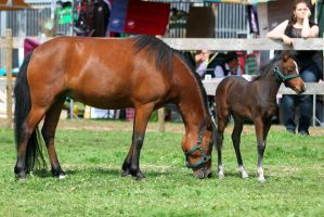 Mare and foal 1 by Kiwiaa