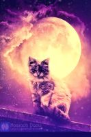 Cat and the Moon by mossaabdaoui