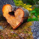 Nature's heart shape by magentalight