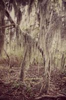 EVEN More Spanish Moss by DonLeo85