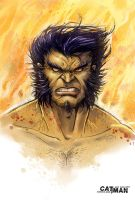 Wolverine sketch by x-catman