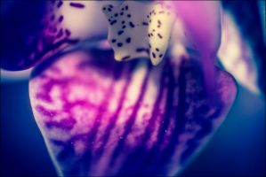 Orchidian Power by db-photoblogDOTcom