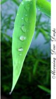 Morning Dew Drops by lostyouth