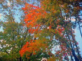 Fall is here by Wolfman163