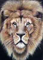 Lion Pastel drawing by donnabe