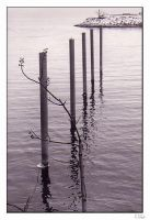 A Post and a Twig by TiZa