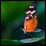 Orange Beauty by IngoSchobert